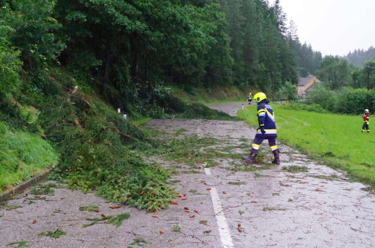 Brandverdacht und blockierende Bäume